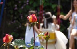 foto-rosas-ninas1